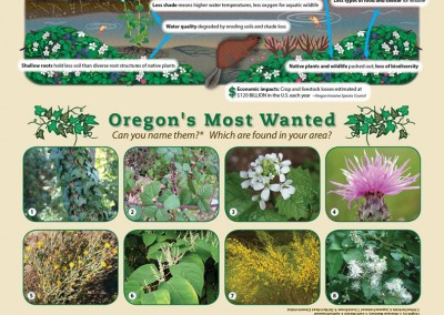 Invasive Plants Education Poster