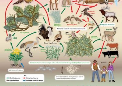 Sagebrush Ecosystem Poster