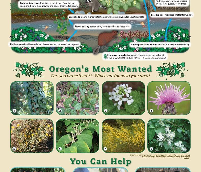 Invasive Plants Education Poster